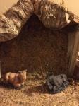 animals, stable, shepherds
